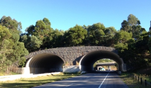 Overpass near Brunswick Heads