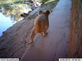 Sponsored-Koala-research-Camera-276x207[1]
