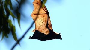 Fllying bat