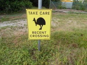 cassowary crossing